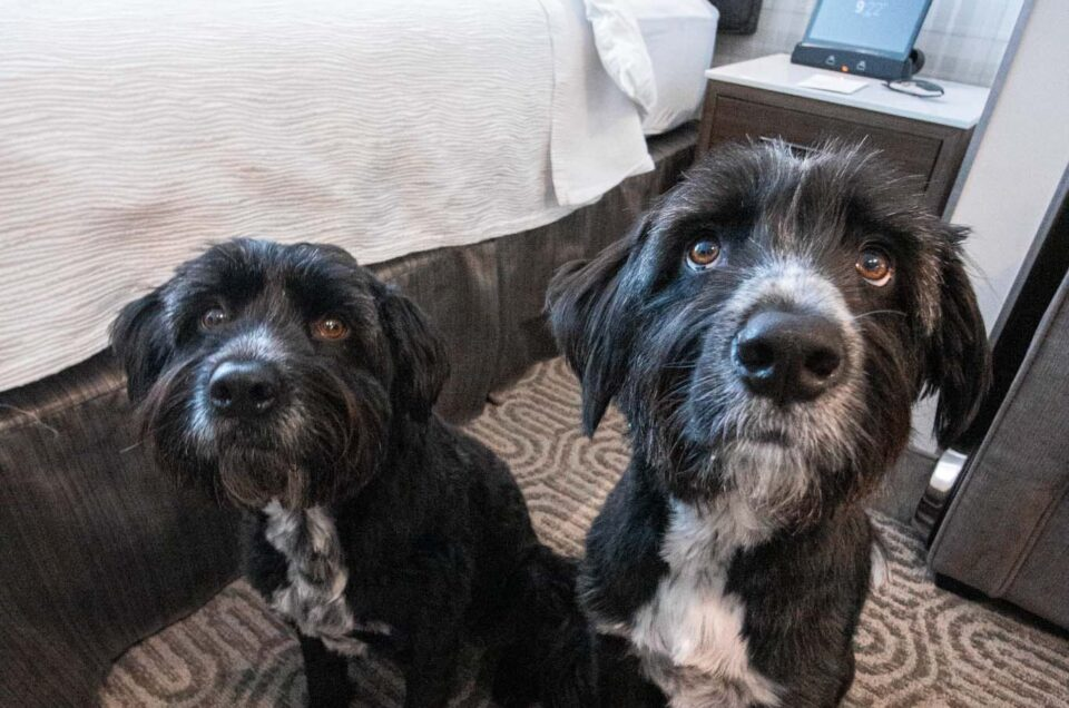 Best Western Hotels & Resorts Pet Policy