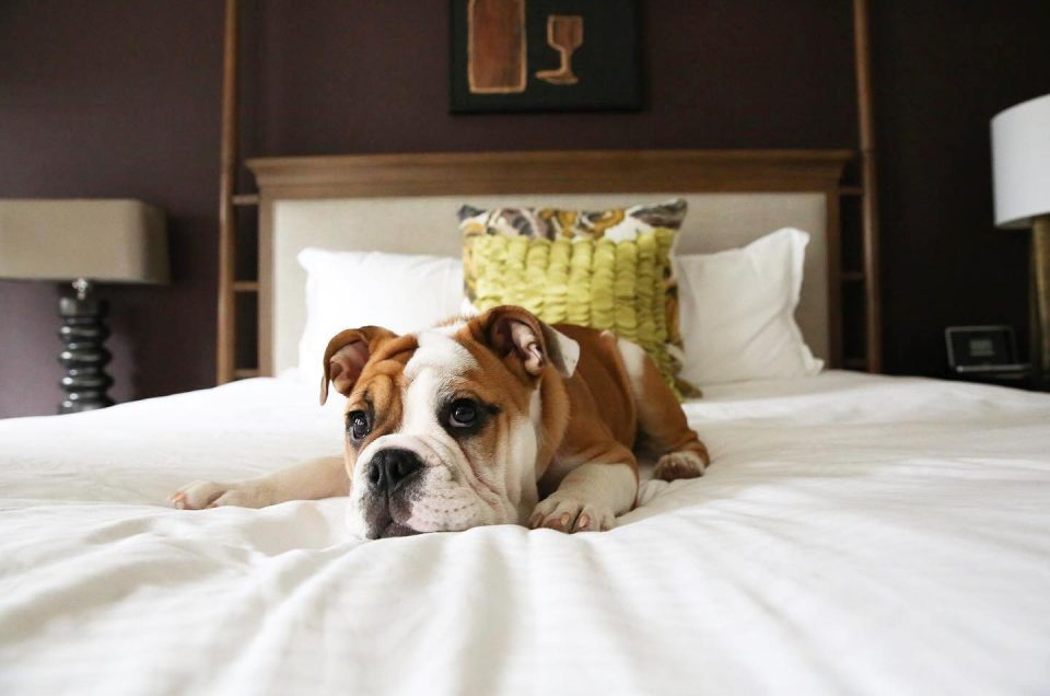 Kimpton Hotels Pet Policy