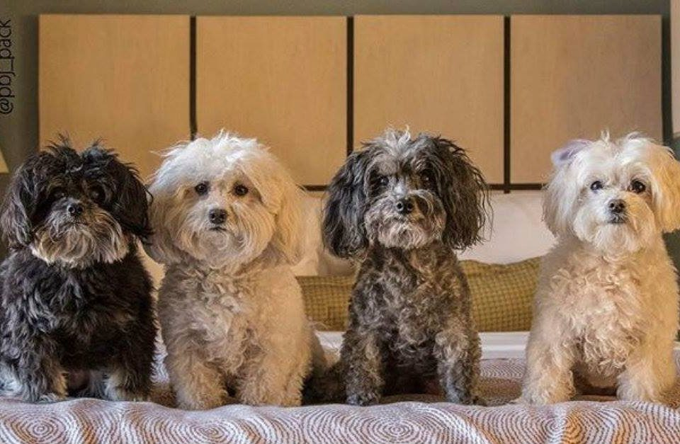 Candlewood Suites Pet Policy