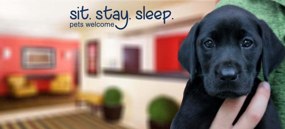 Extended Stay America Pet Policy