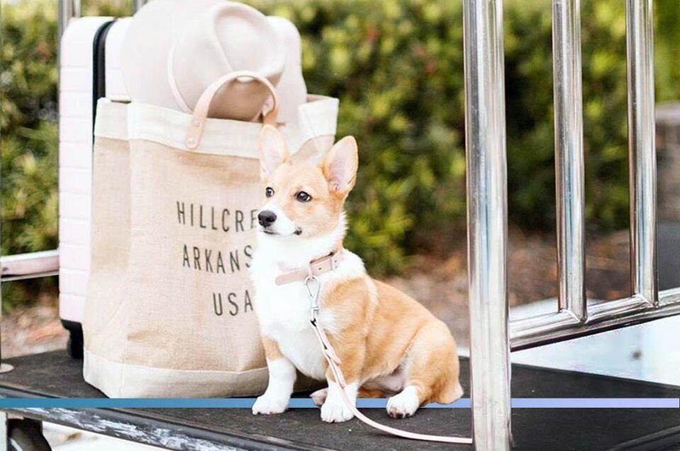 IHG Hotels & Resorts Pet Policy