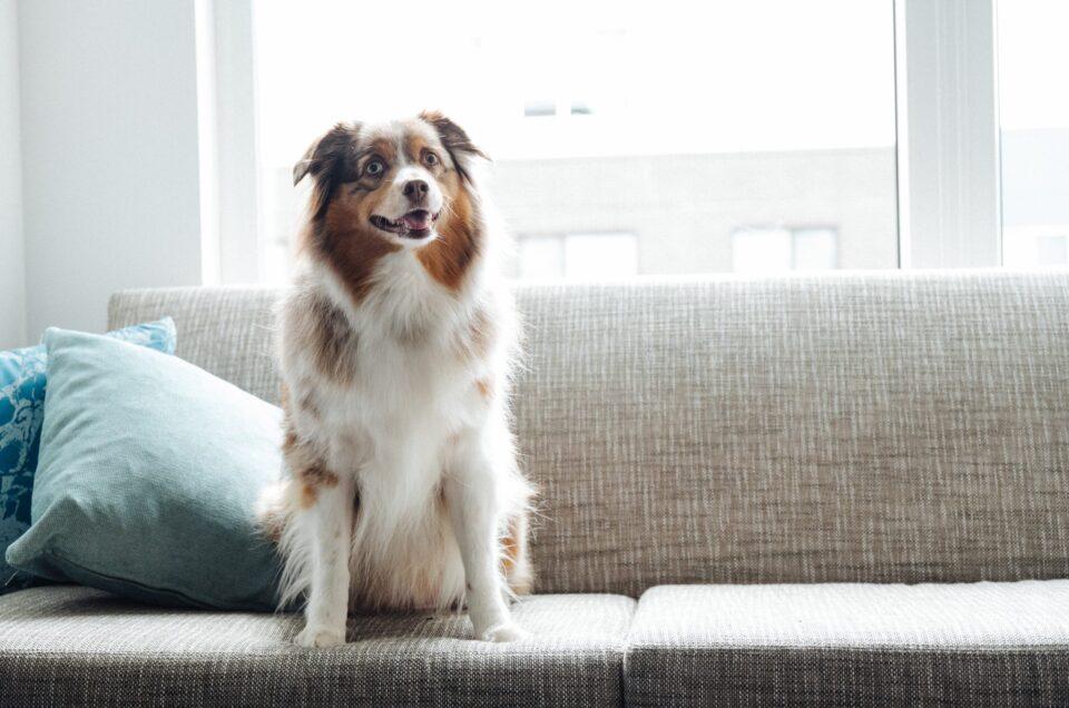 Marriott Hotels Pet Policy