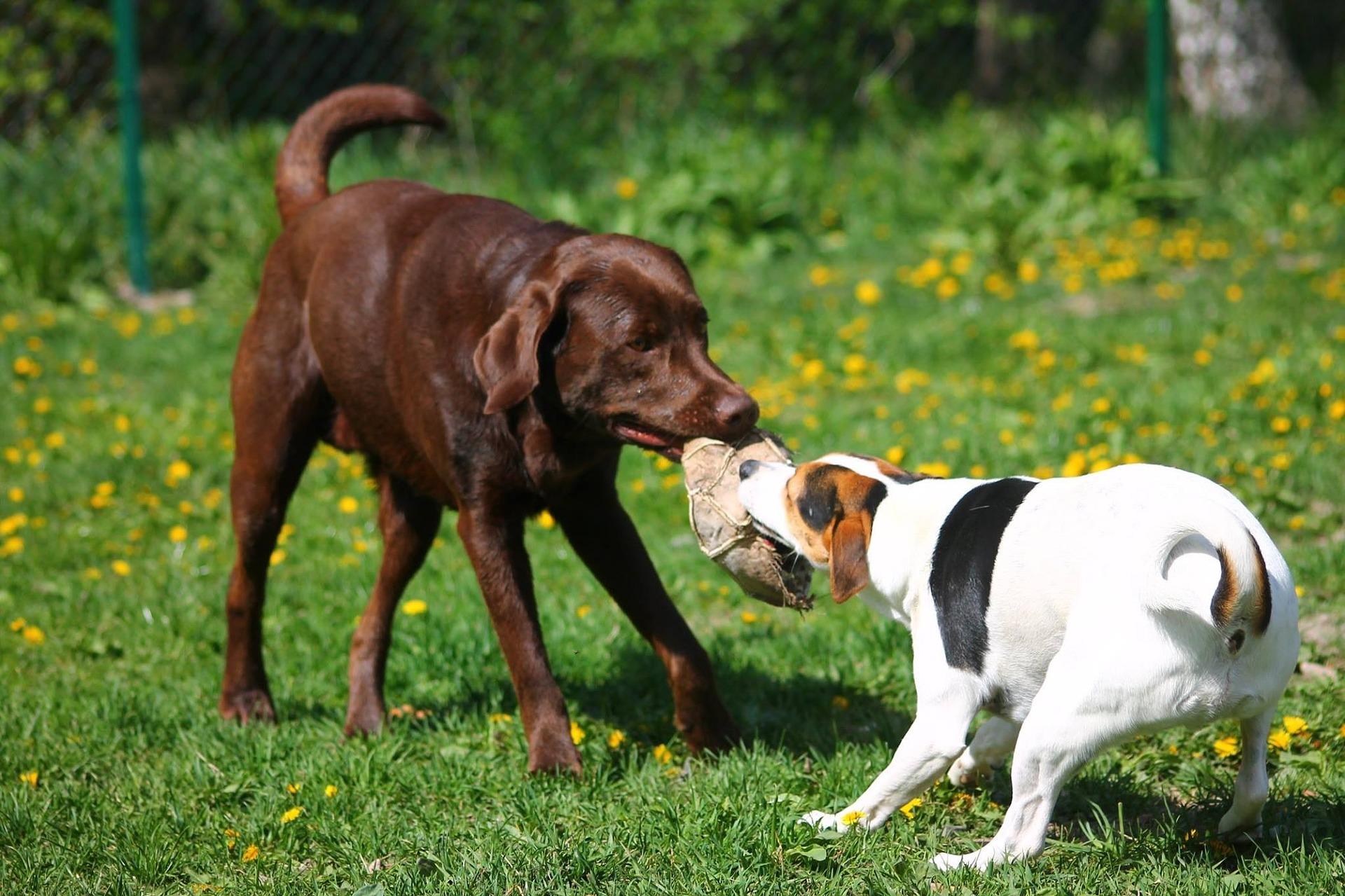 Dog Parks U.S.