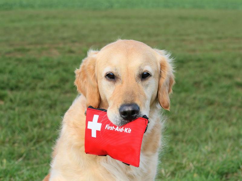 Pet Evacuation & Disaster Preparedness