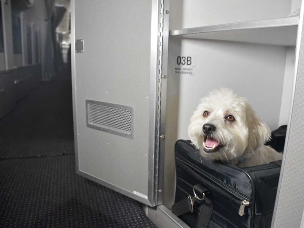 Air Travel with Pets
