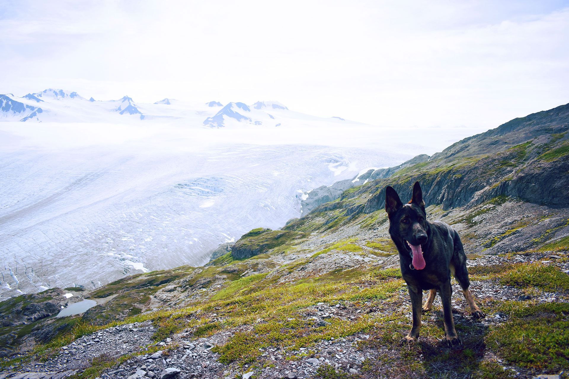 Pets in U S  National Parks & Forests - Dogs Allowed in