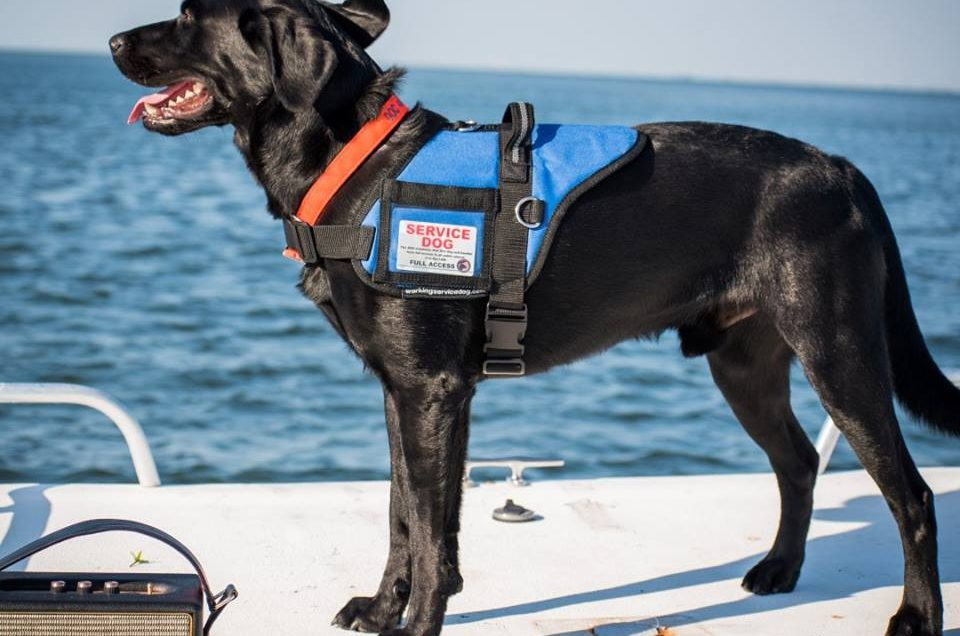 Working Service Dog - Service Dog Vests & Patches