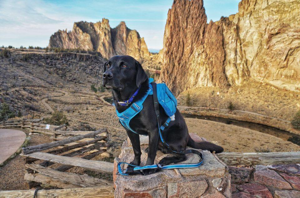 Kurgo - Active Dog Travel & Outdoor Products