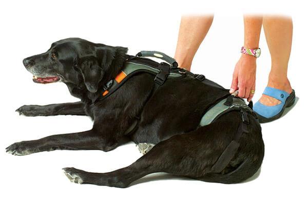 Help 'Em Up Dog Harness - Dog Mobility Harness