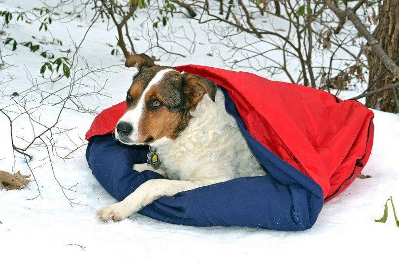 NobleCamper 2-in-1 Travel Dog Bed & Sleeping Bag