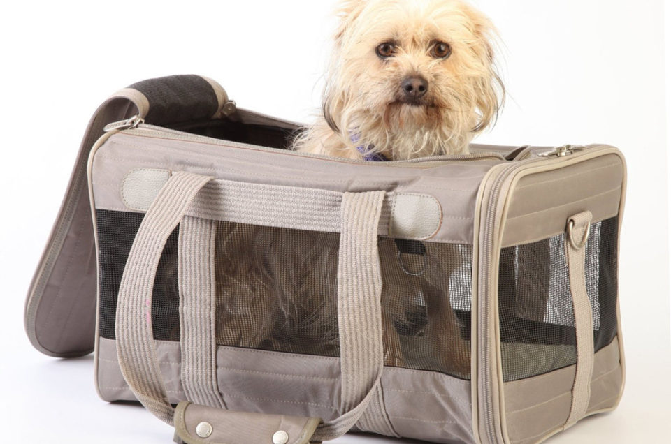 Sherpa - Pet Carrier for Airline Travel