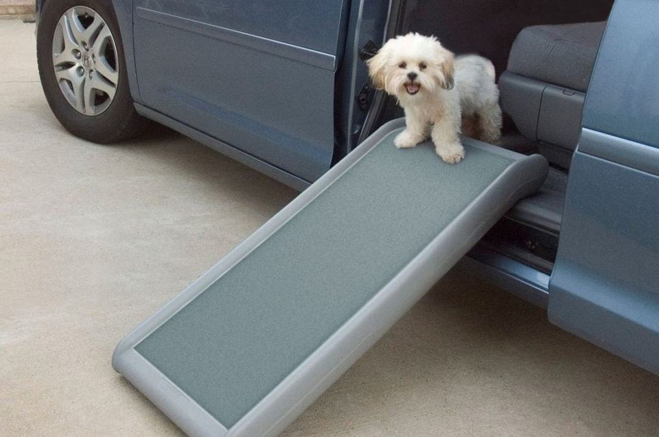 Chewy Dog Travel Products