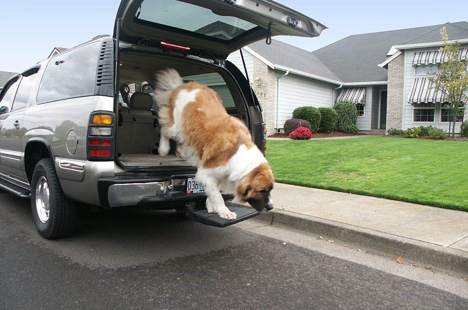 Otto Step - Dog & Pet Step - Car Step