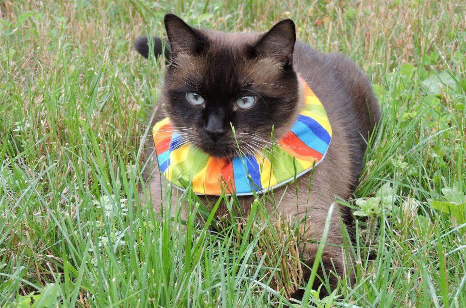 Birdsbesafe Cat Collar Cover