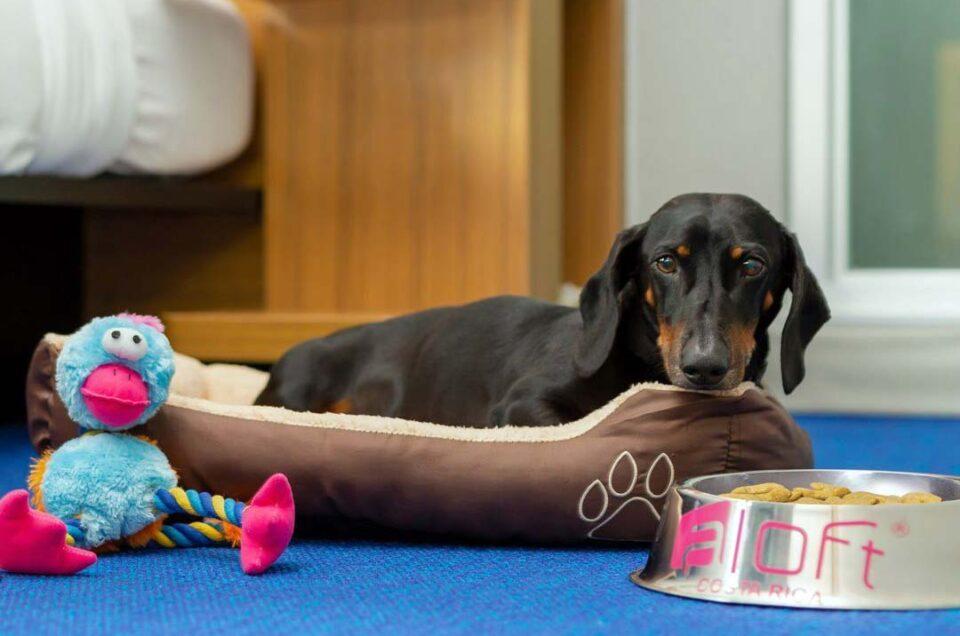 Aloft Hotels Pet Policy