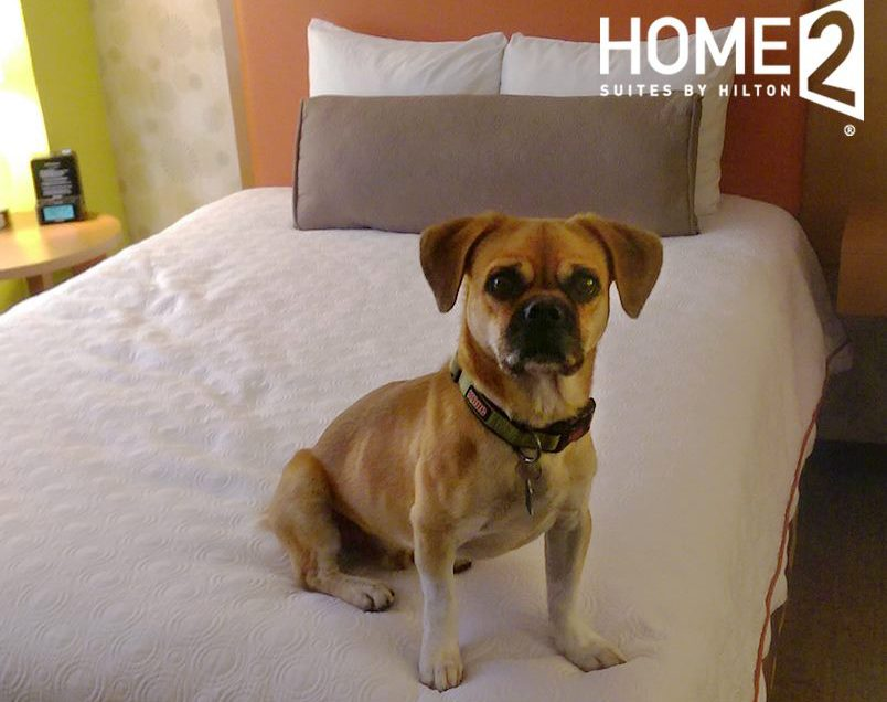 Home2 Suites Pet Policy