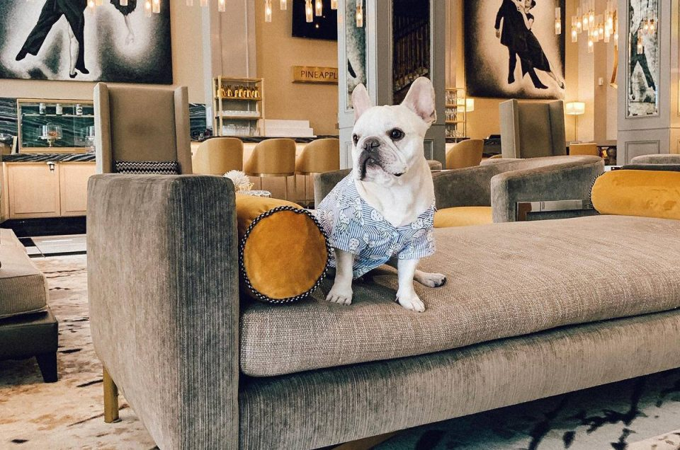 Staypineapple Hotels Pet Policy