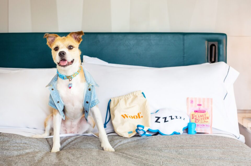 Canopy by Hilton Pet Policy