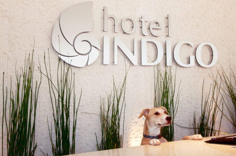 Hotel Indigo Pet Policy